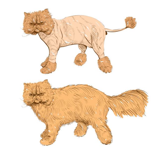 Persian Cat Clip Art, Vector Images & Illustrations