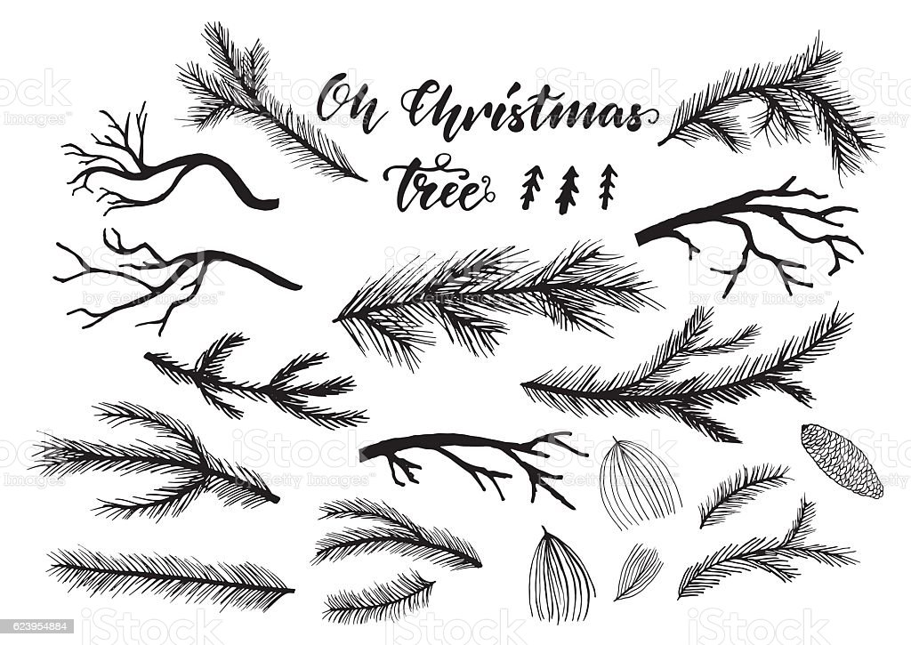 Hand drawn pine, spruce branches, twigs. vector art illustration