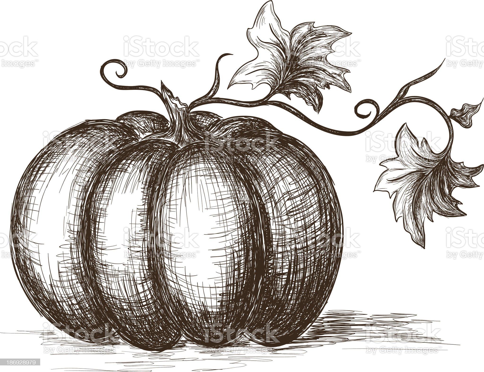 Hand drawn pumpkin royalty-free stock vector art