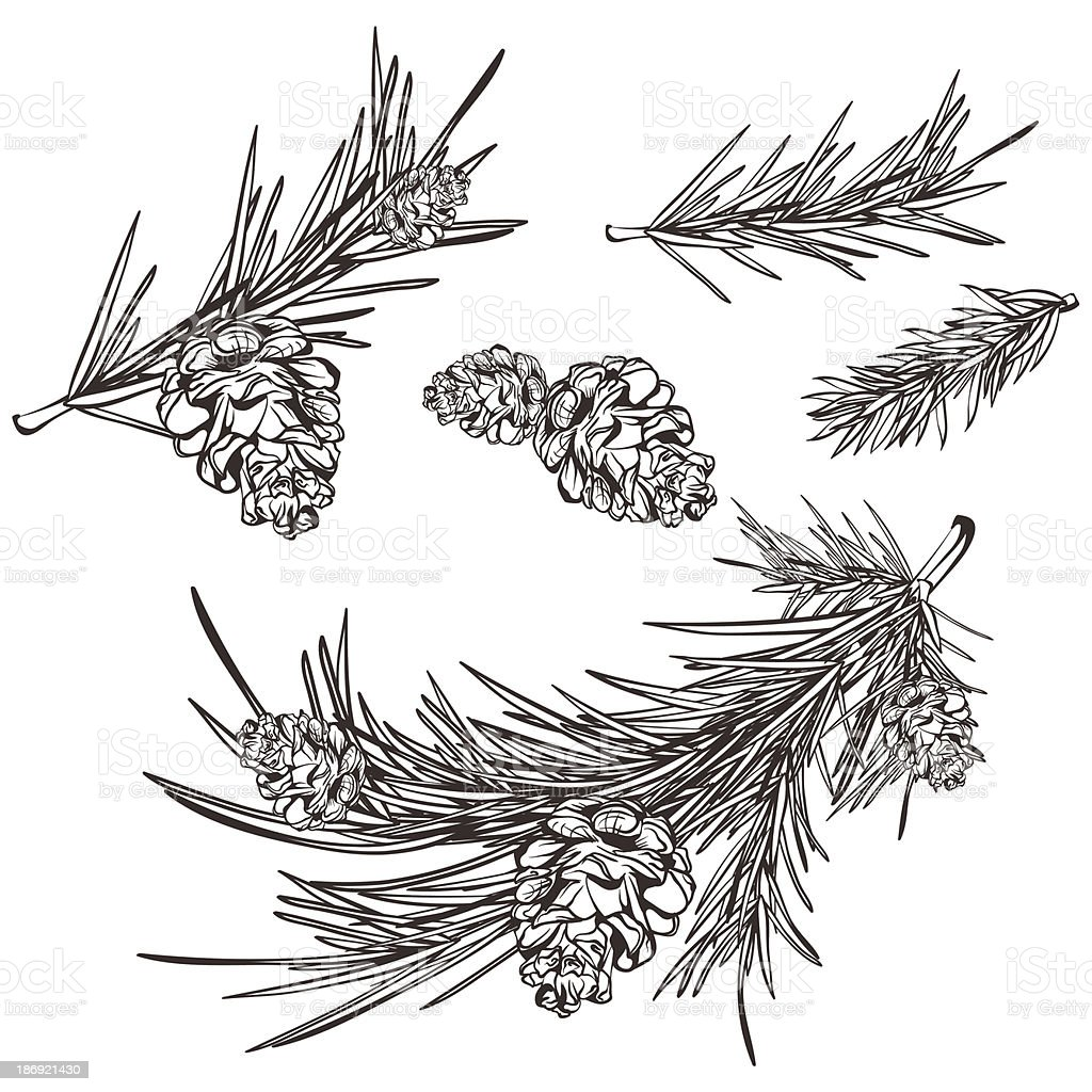 hand drawn retro pine branches vector art illustration