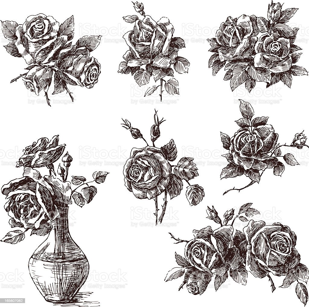 hand drawn roses vector art illustration