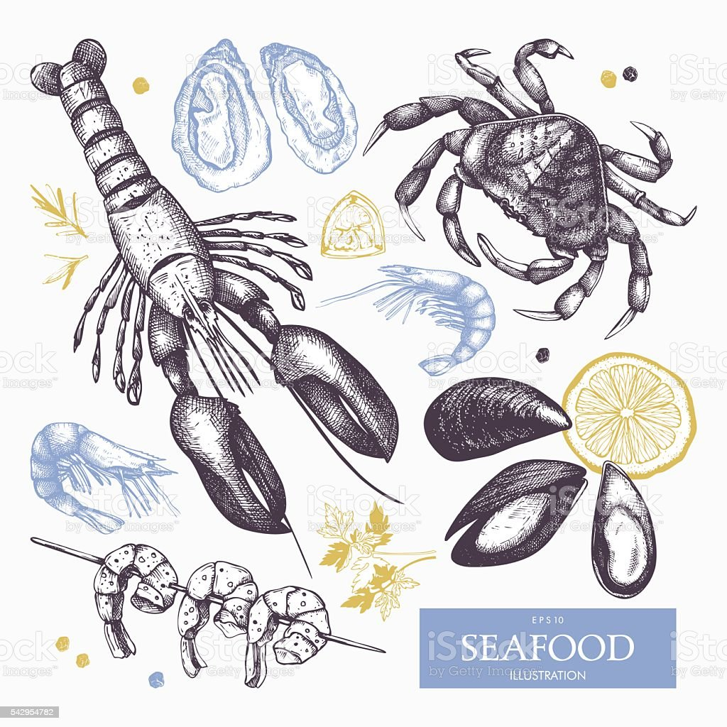 Hand drawn sea food sketch collection vector art illustration