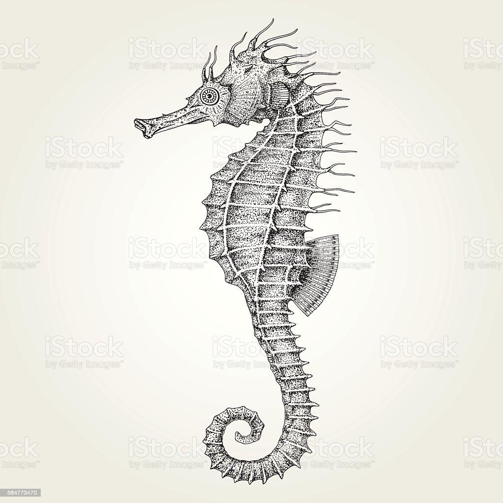 Hand drawn seahorse vector art illustration