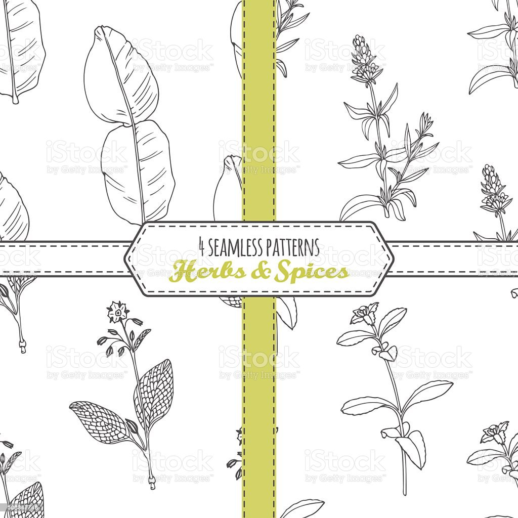 Hand drawn seamless patterns collection with kaffir lime, borage, hyssop vector art illustration