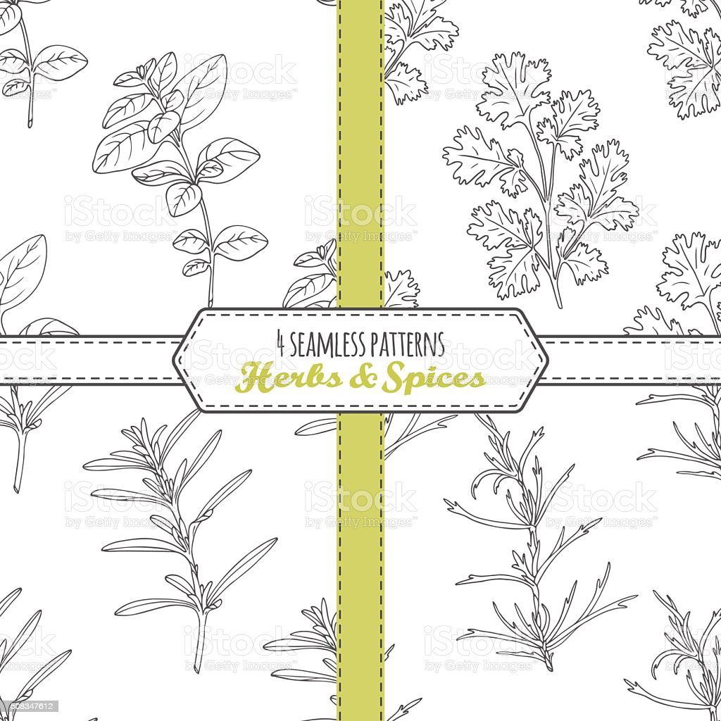 Hand drawn seamless patterns collection with oregano, tarragon, savory, cilantro vector art illustration