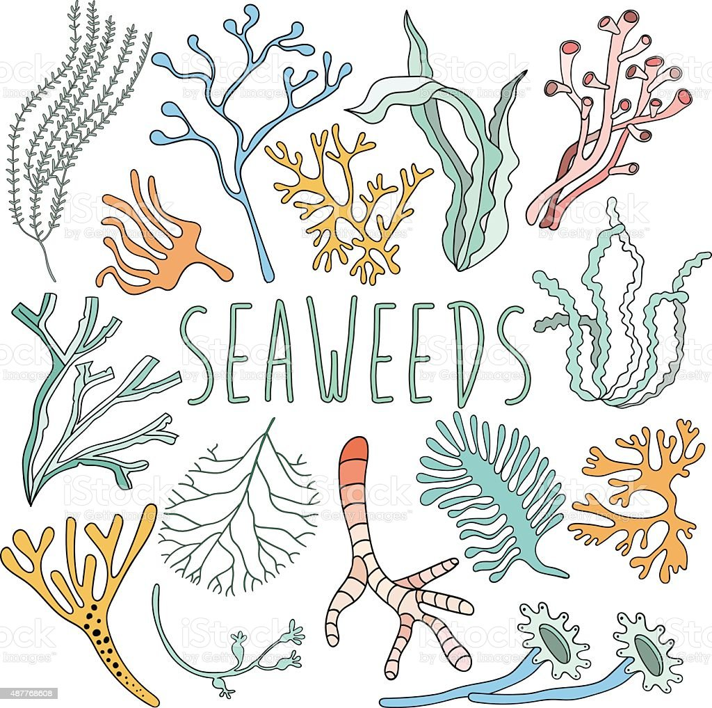 Hand drawn seaweed set. Collection of underwater plant vector art illustration