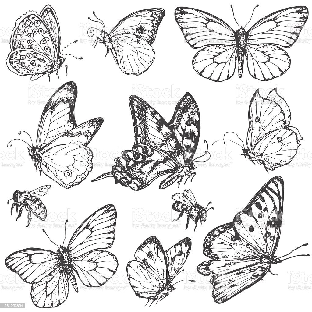 Hand drawn set of butterflies and bees. vector art illustration