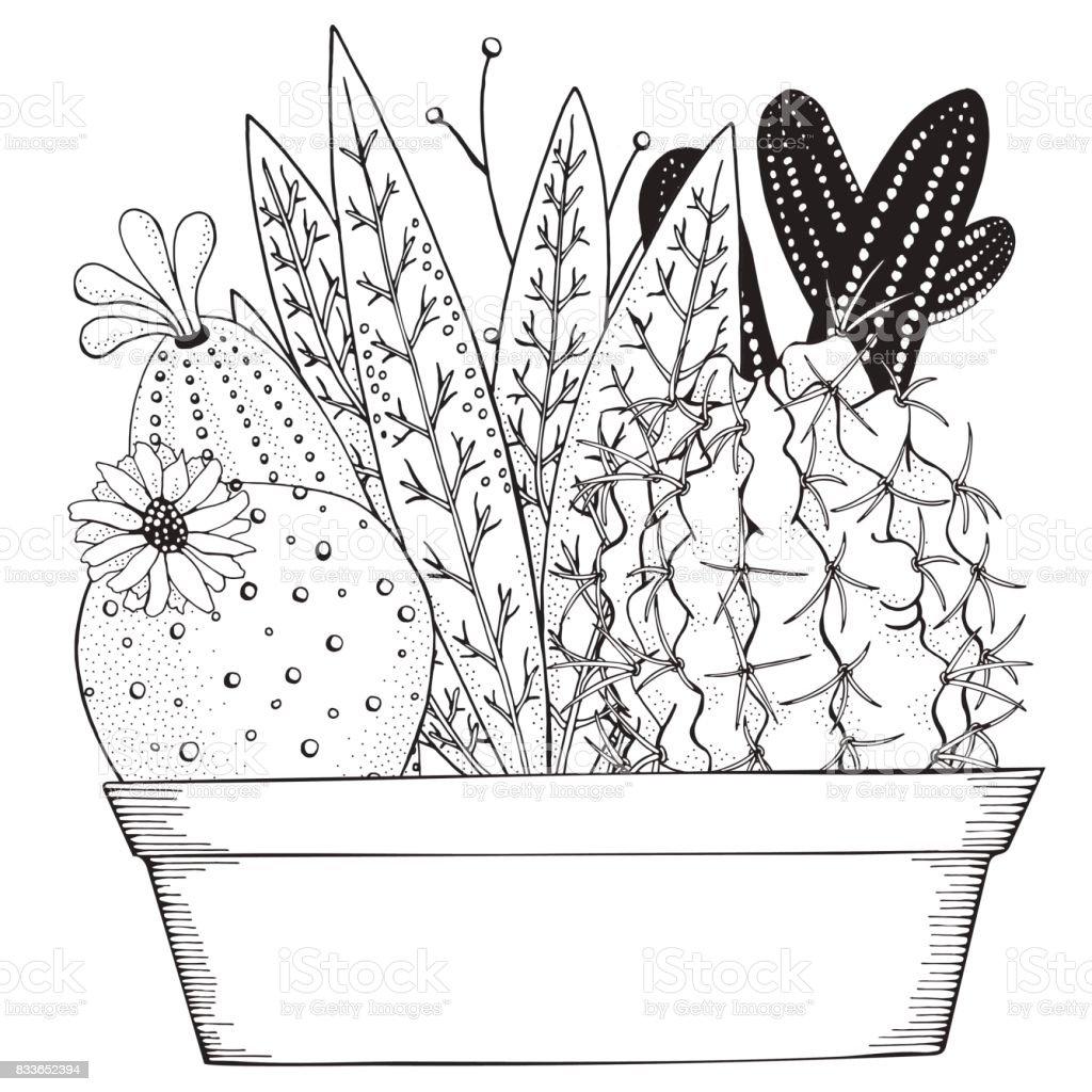 mano dibujada de suculentas y cactus en macetas elementos