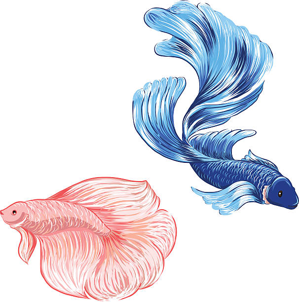 furthermore Betta 20clipart 20cute 20purple 20fish additionally Fish Images Cartoon also Teal Fish Cliparts additionally Fish on a plate clipart. on betta fish clip art