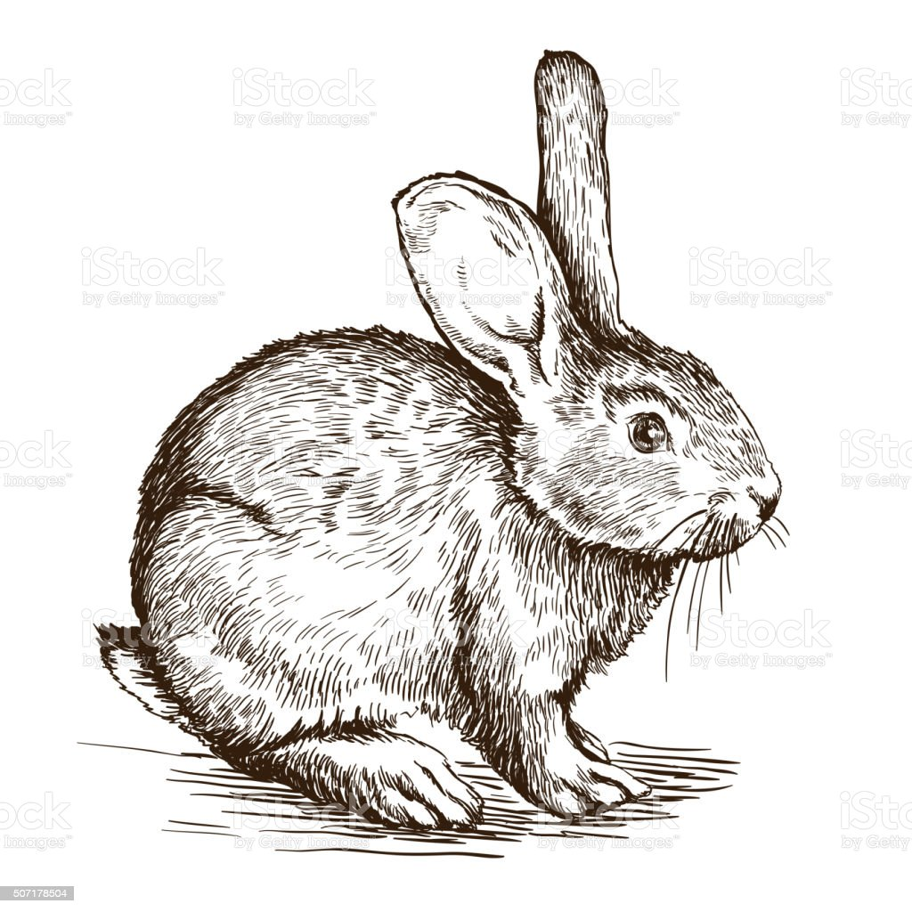 hand drawn sketch of  rabbit vector art illustration