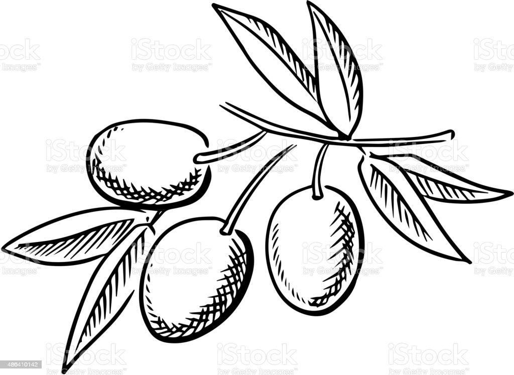 Hand drawn sketch of ripe olives vector art illustration