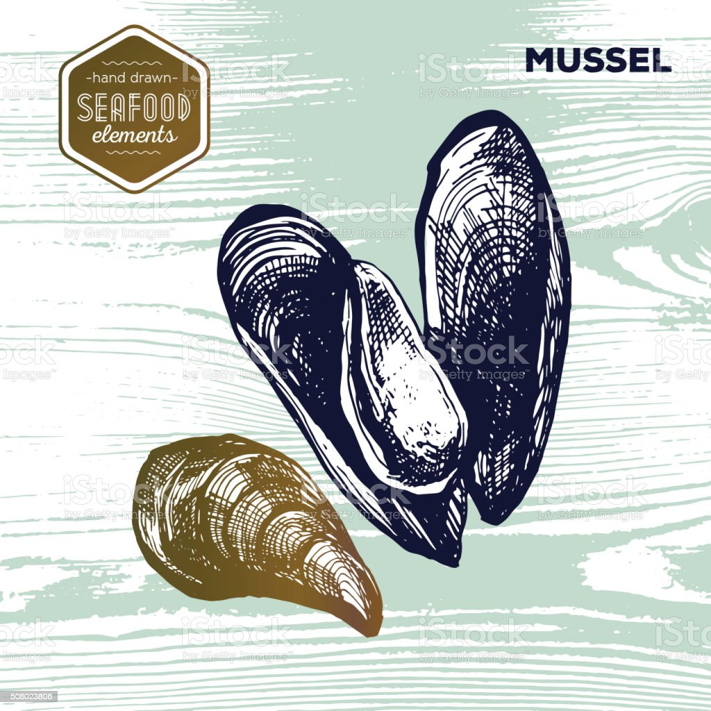 Hand drawn sketch seafood of mussels. Vector illustration. Vintage style vector art illustration