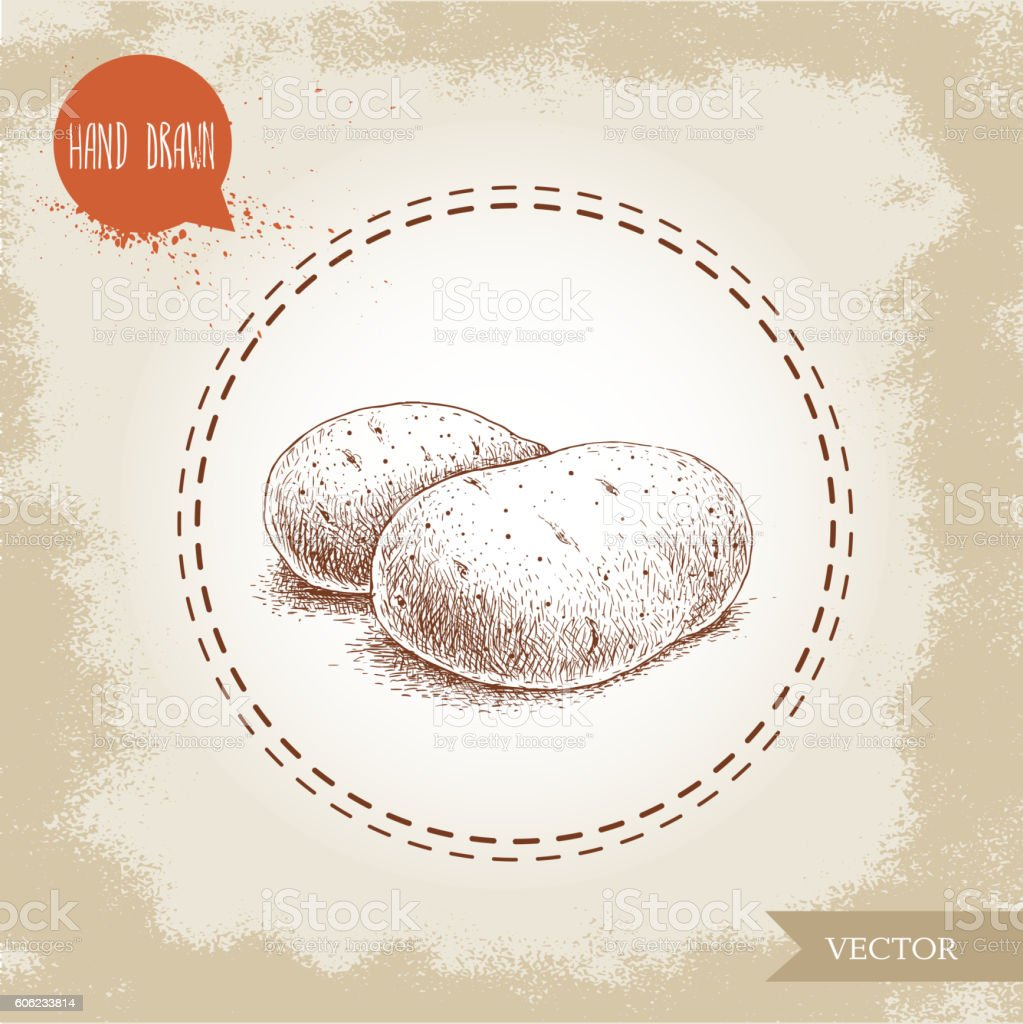 Hand drawn sketch style illustration of ripe potatoes. vector art illustration