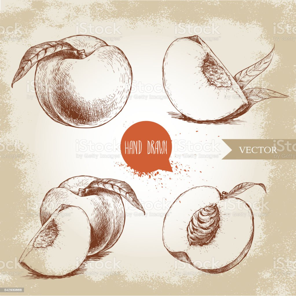 Hand drawn sketch style peach fruit set vector art illustration
