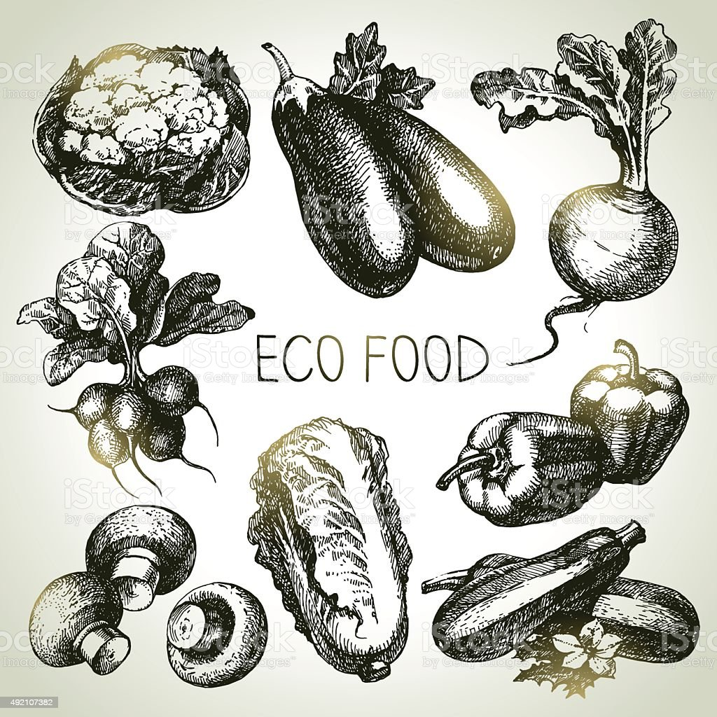 Hand drawn sketch vegetable set. Eco foods.Vector illustration vector art illustration