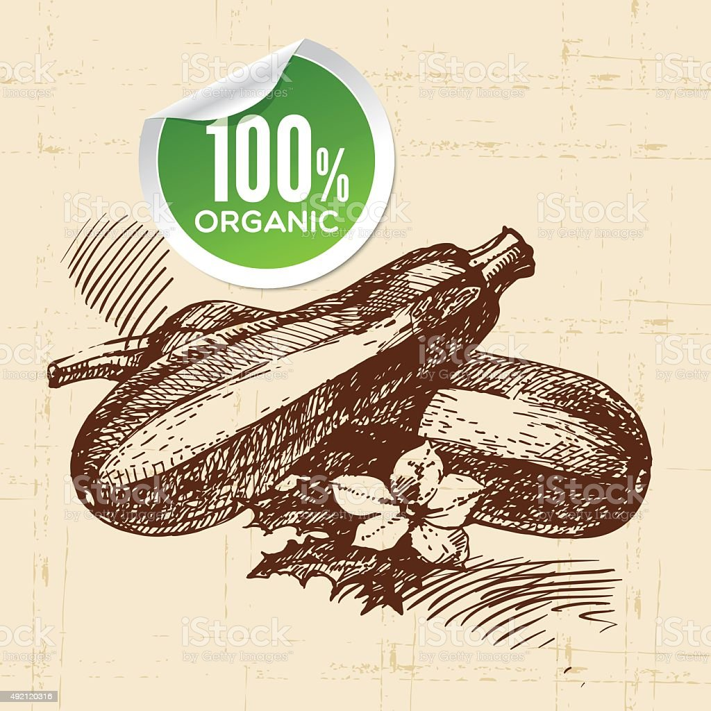 Hand drawn sketch vegetable zucchini. Eco food background.Vector vector art illustration
