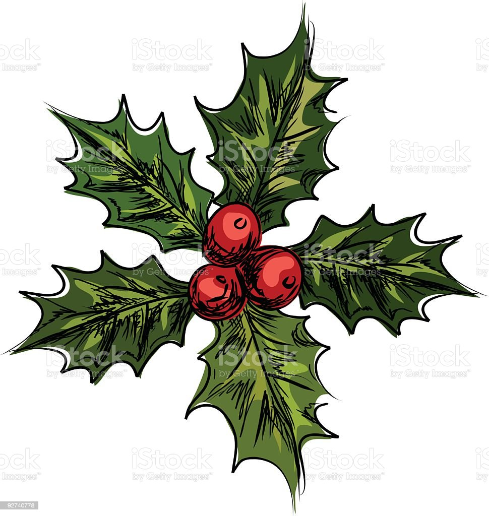 Hand Drawn Sketched Holly Illustration royalty-free stock vector art