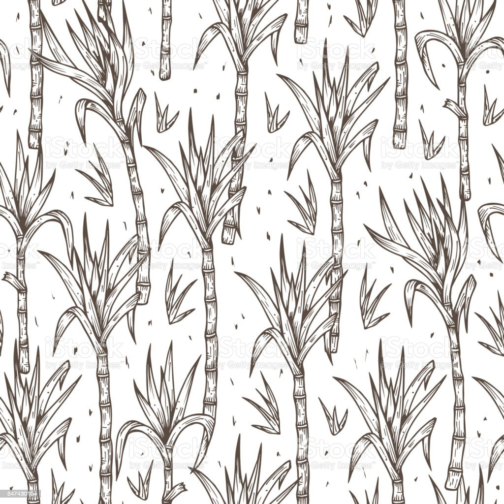 Hand Drawn Sugarcane Plants stalks with leaves Seamless Pattern vector art illustration