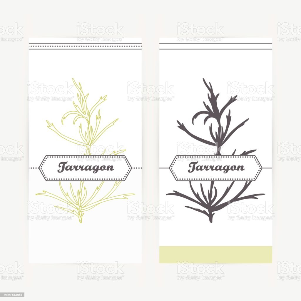 Hand drawn tarragon in outline and silhouette style. Spicy herbs vector art illustration