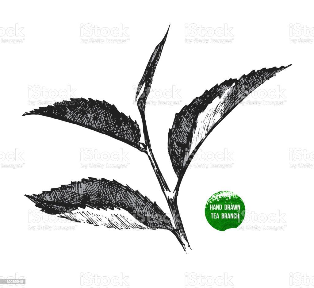 hand drawn tea leaf vector art illustration
