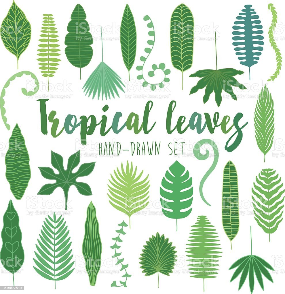 Hand drawn tropical leaves. Jungle set vector art illustration