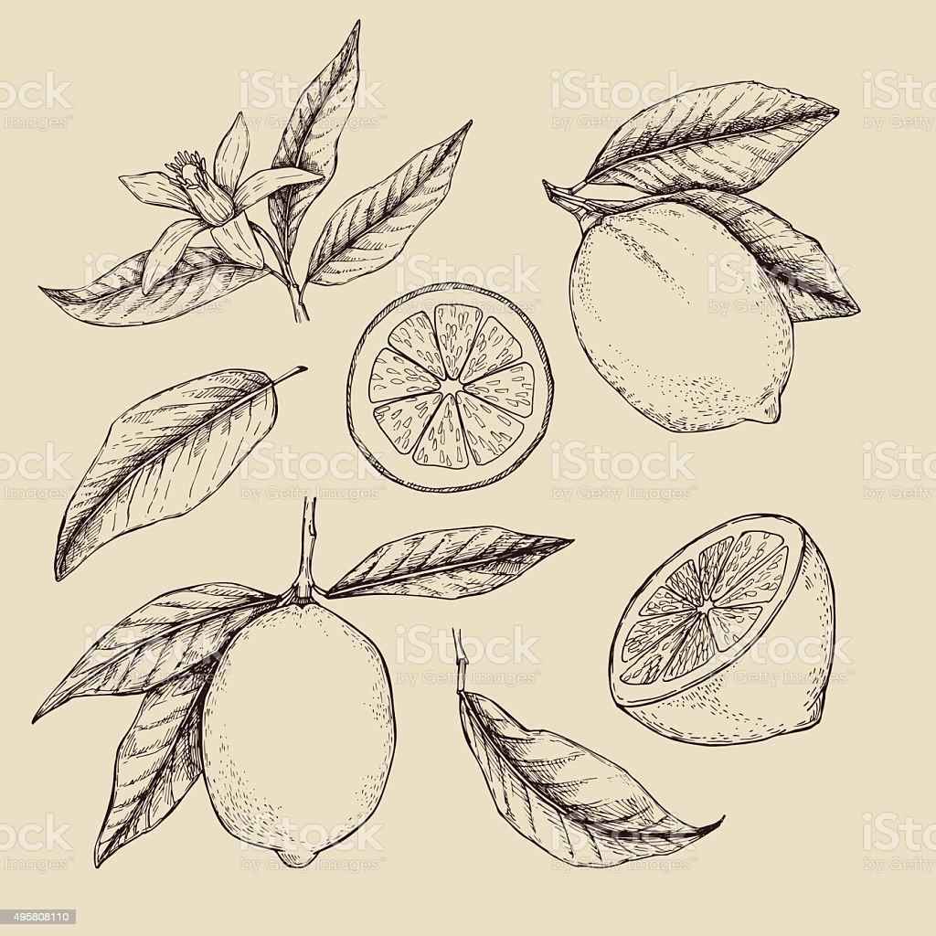 Hand drawn vector illustration - Collections of Lemons. vector art illustration