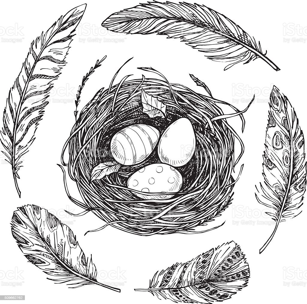 Hand drawn vector illustration. Nest with Easter eggs and feathers vector art illustration