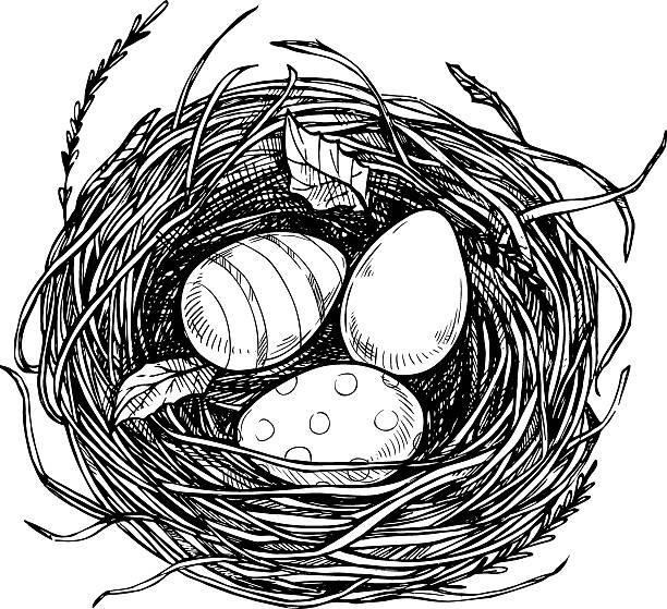 Line Drawing Nest : Bird s nest clip art vector images illustrations istock