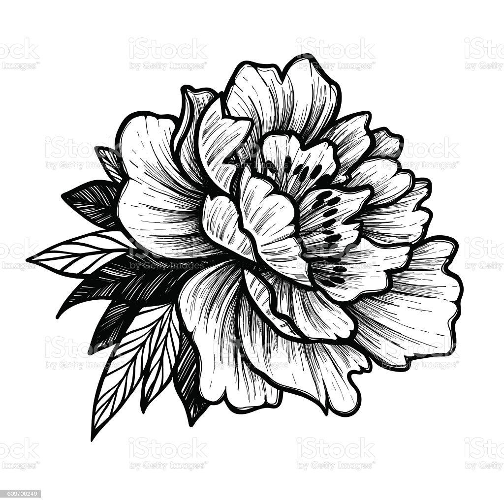 Hand Drawn Vector Illustration Peony Flower Floral Tattoo stock vector art 60