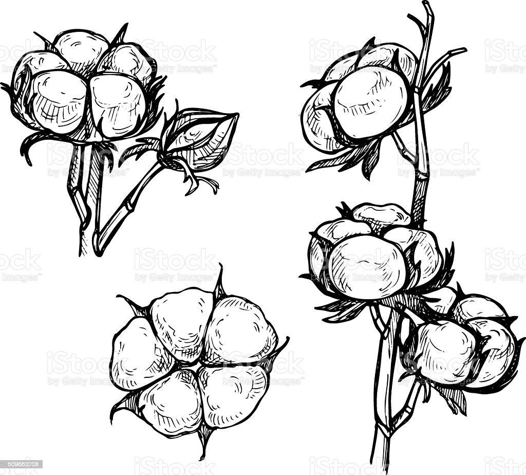 Hand drawn vector illustration - Set of cotton. vector art illustration