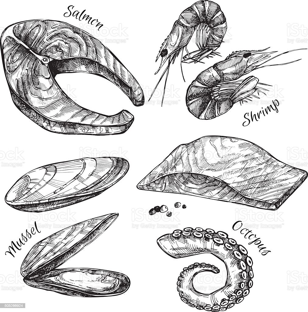 Hand drawn vector illustration - Set of seafood vector art illustration