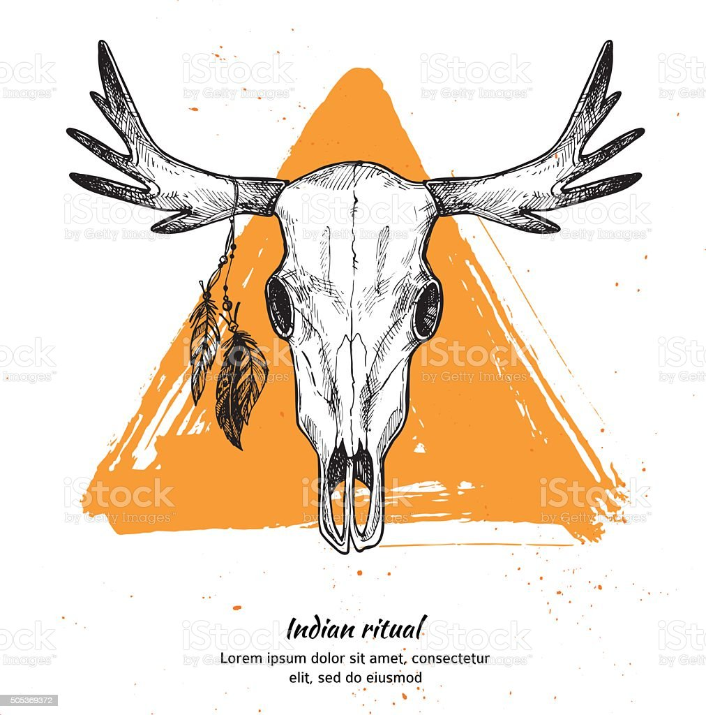 Hand drawn vector illustration - skull of animal with feathers. vector art illustration