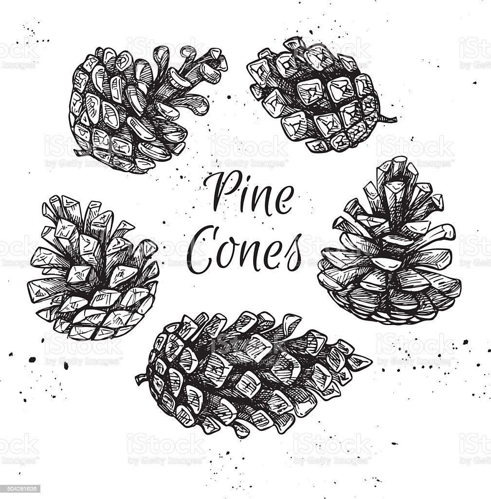 Hand drawn vector illustrations. Collection of pine cones. Forest vector art illustration
