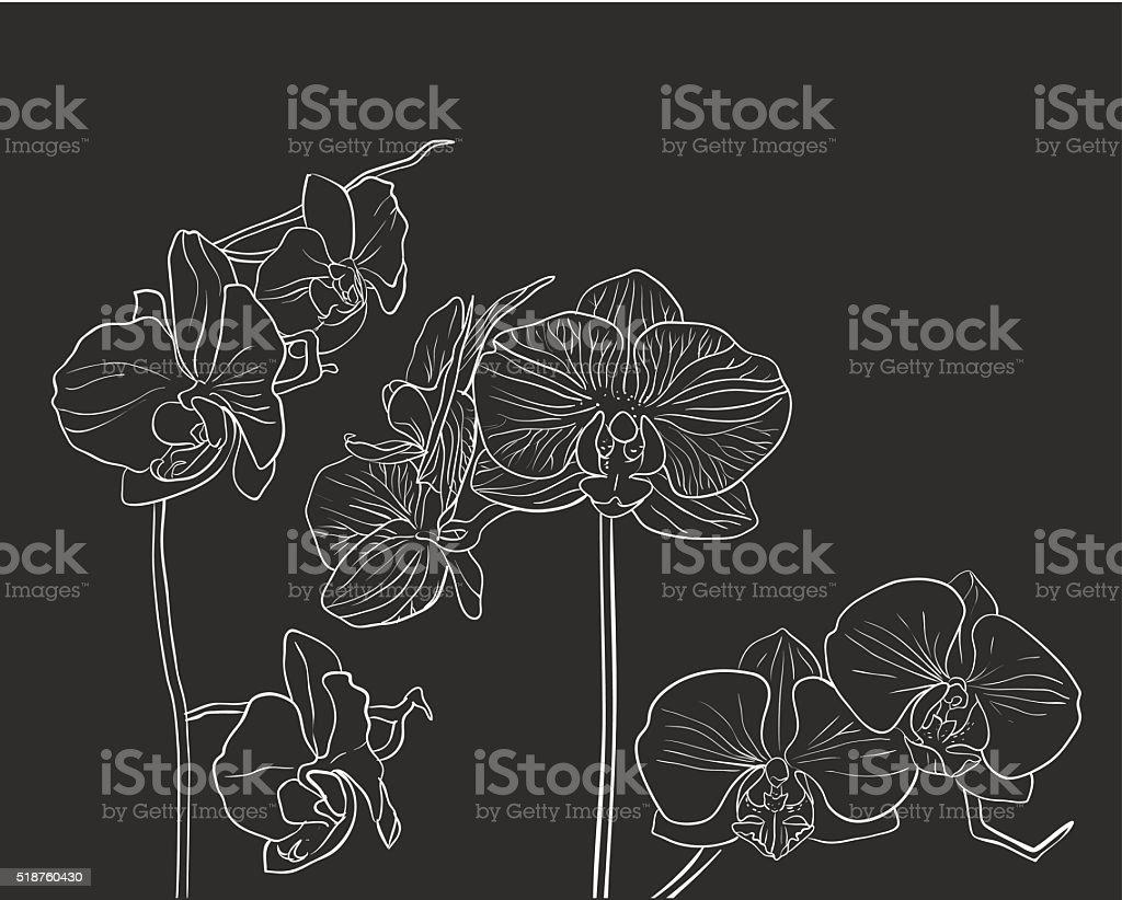 Hand drawn vector orchid on black vector art illustration