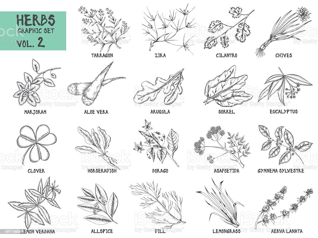Hand drawn vector set of herbs and spices vintage illustrations. vector art illustration