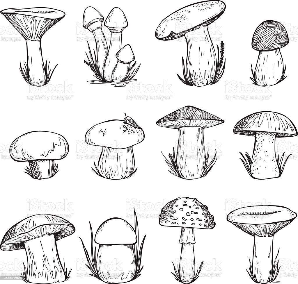 Hand drawn vector vintage illustration - Mushrooms. vector art illustration