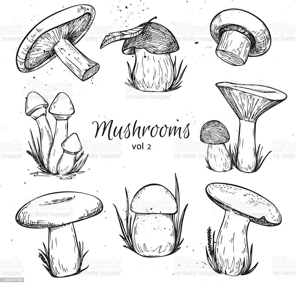 Hand drawn vector vintage illustration - Mushrooms. Vol 2. vector art illustration