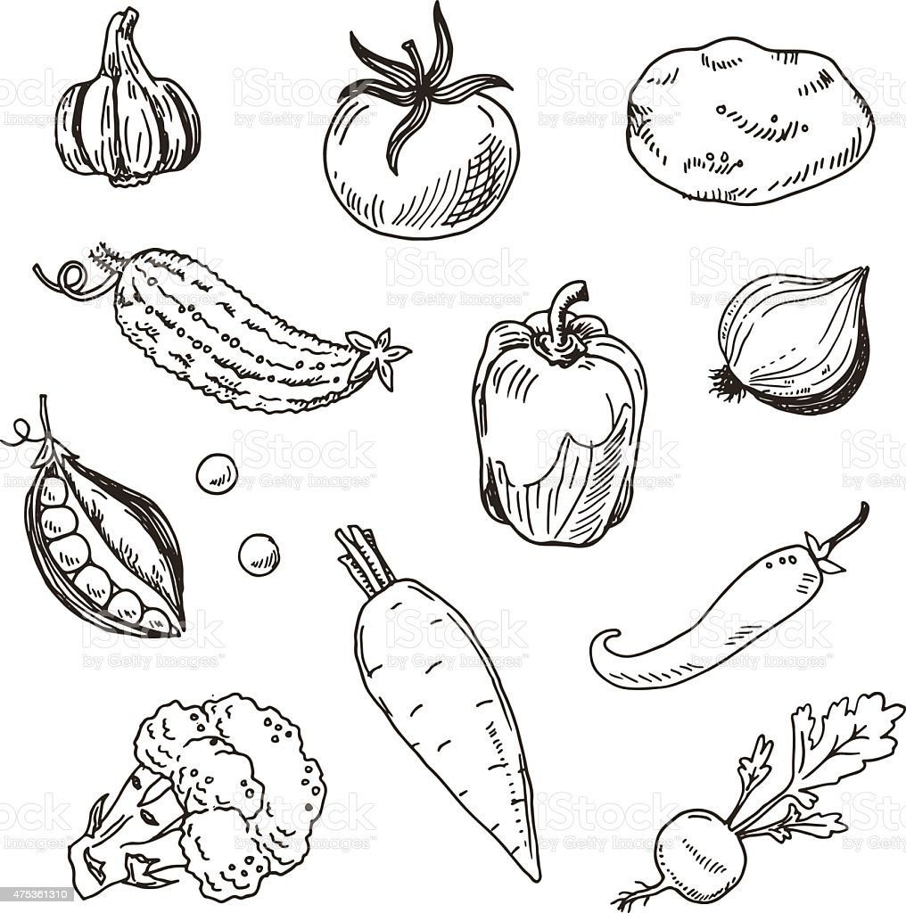 Hand drawn vegetables sketch set vector art illustration