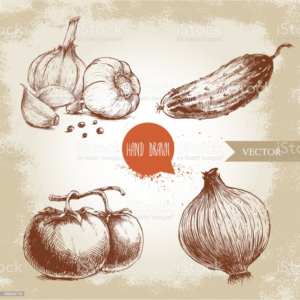hand drawn vegetables. Tomatoes, onion, cucumber and garlics. vector art illustration