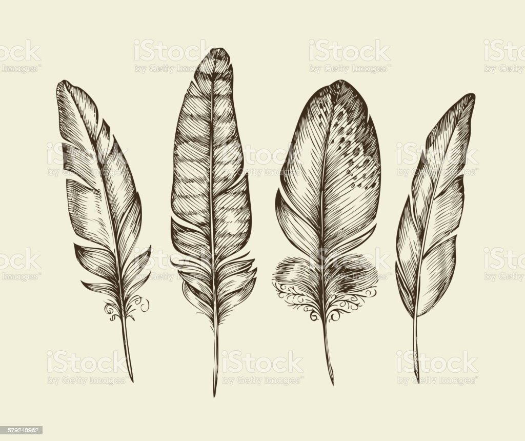 Hand drawn vintage bird feathers. Sketch writing feather. Vector illustration vector art illustration