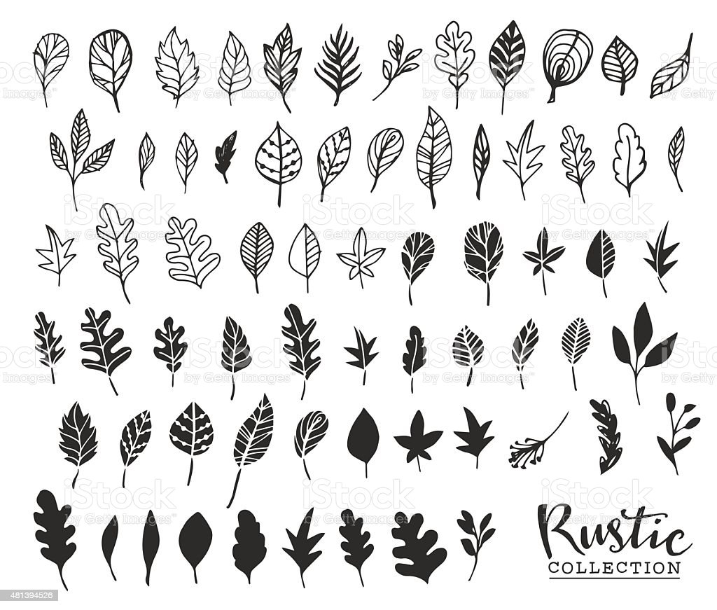 Hand drawn vintage leaves. Rustic decorative vector vector art illustration