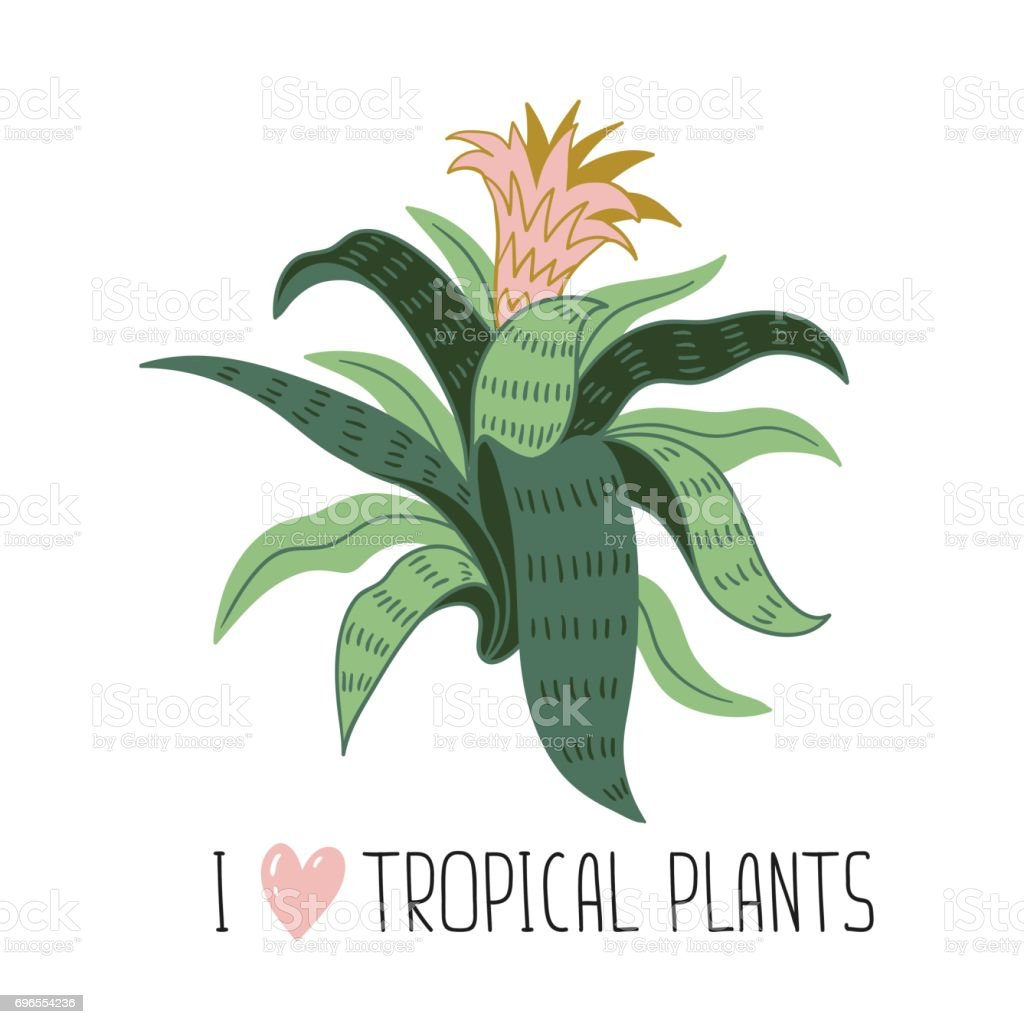 hand drawn wild tropical house plant scandinavian style