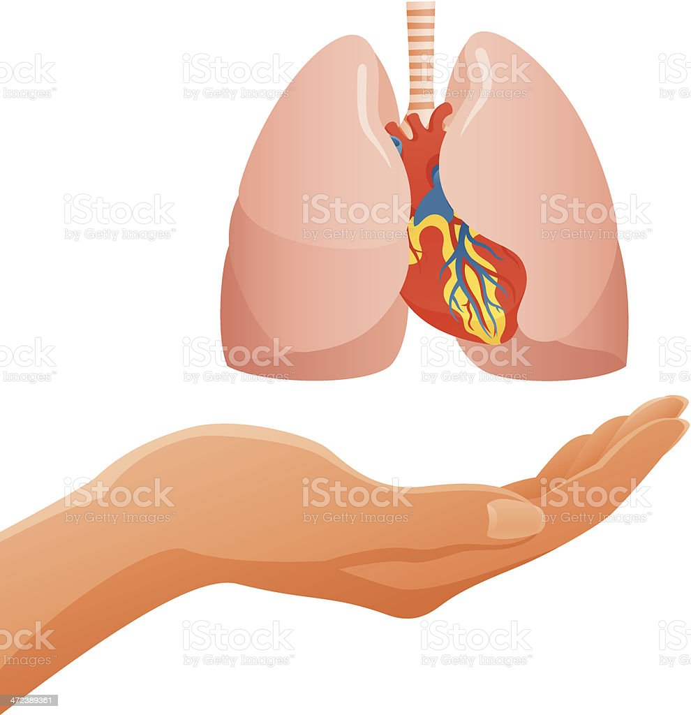Hand Holding Human Lungs & Heart royalty-free stock vector art