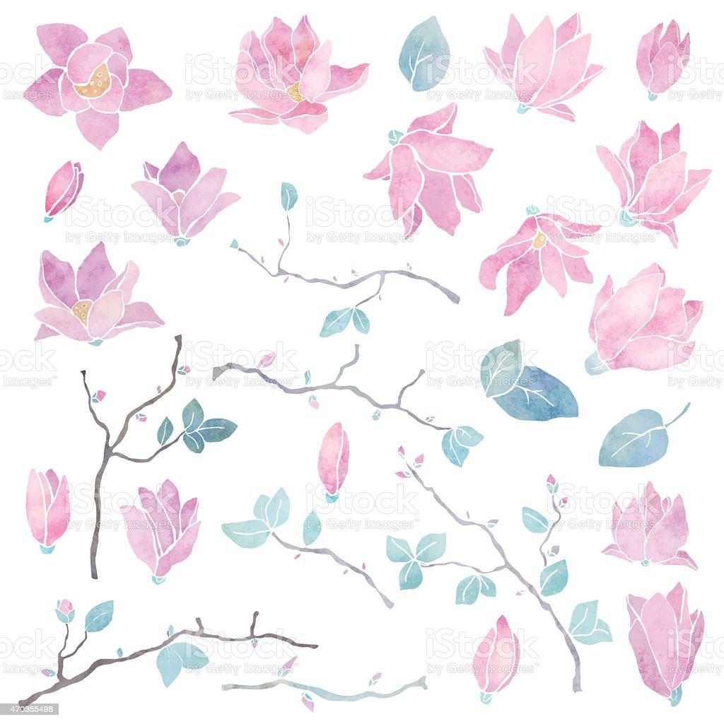 Hand painted magnolia flowers set vector art illustration
