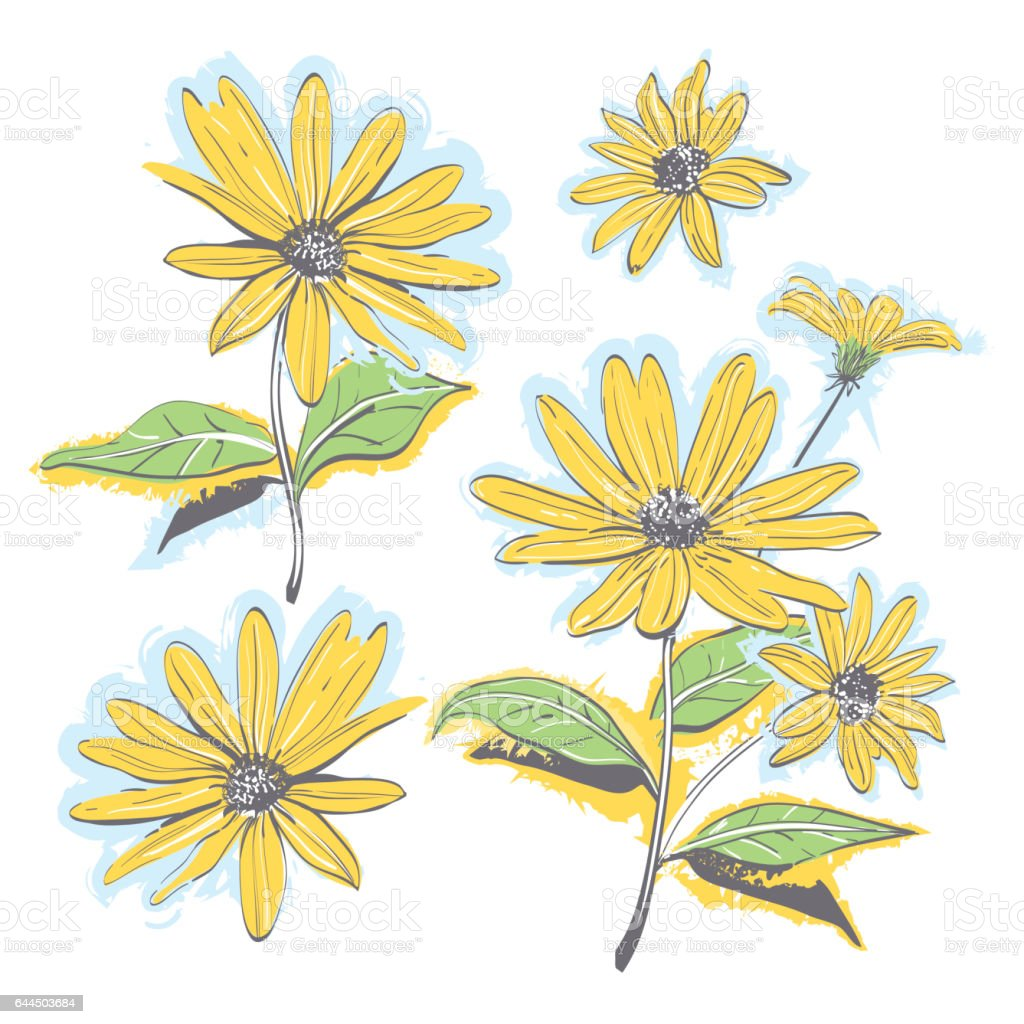 Hand-drawn chamomiles, daisies. Autumn flowers yellow feverfew. Vector watercolor stylization vector art illustration