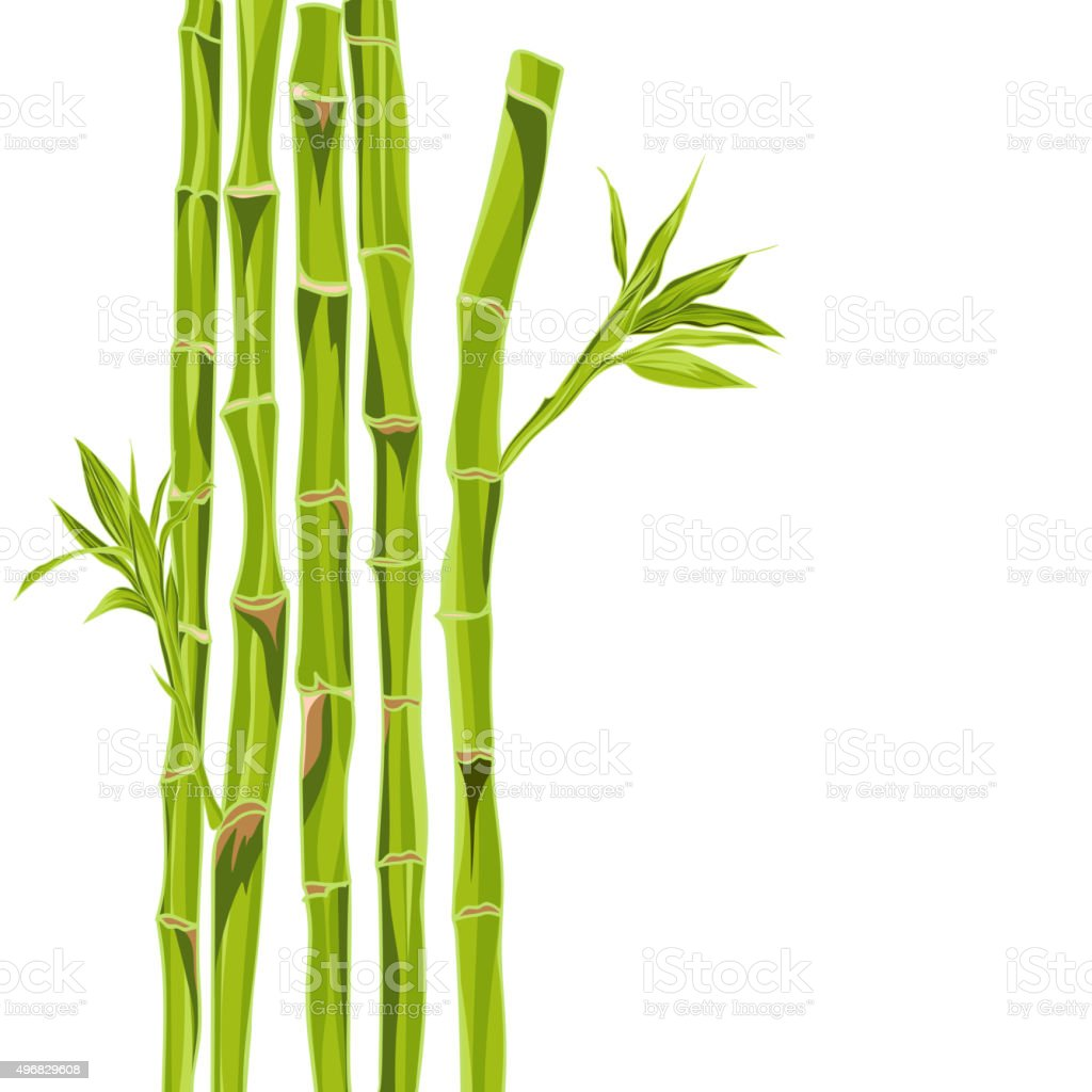 Hand-drawn green bamboo bacground with space for text vector art illustration