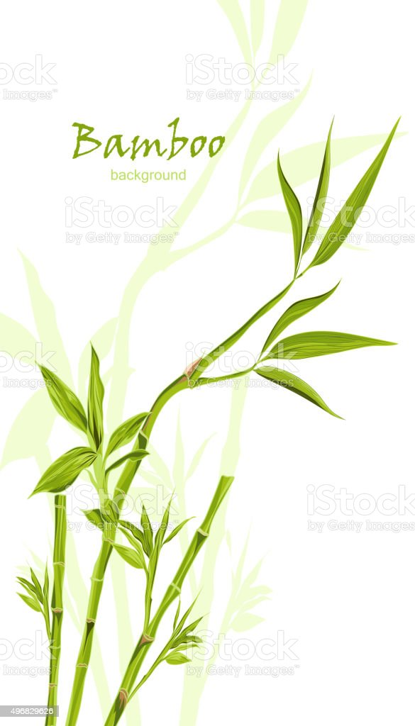 Hand-drawn green bamboo background with space for text vector art illustration