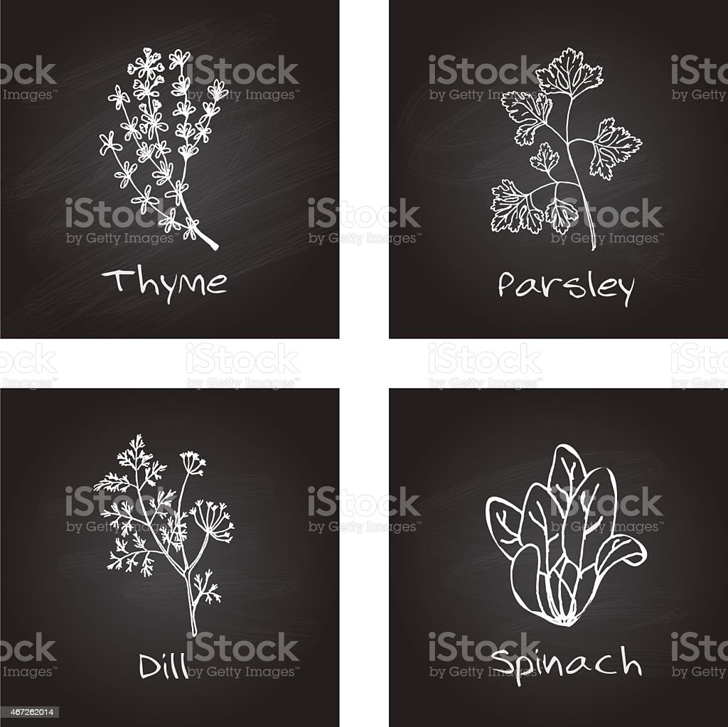 Handdrawn Illustration - Health and Nature Set. Culinary herbs vector art illustration