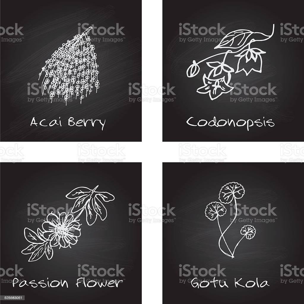 Handdrawn Illustration - Health and Nature Set vector art illustration