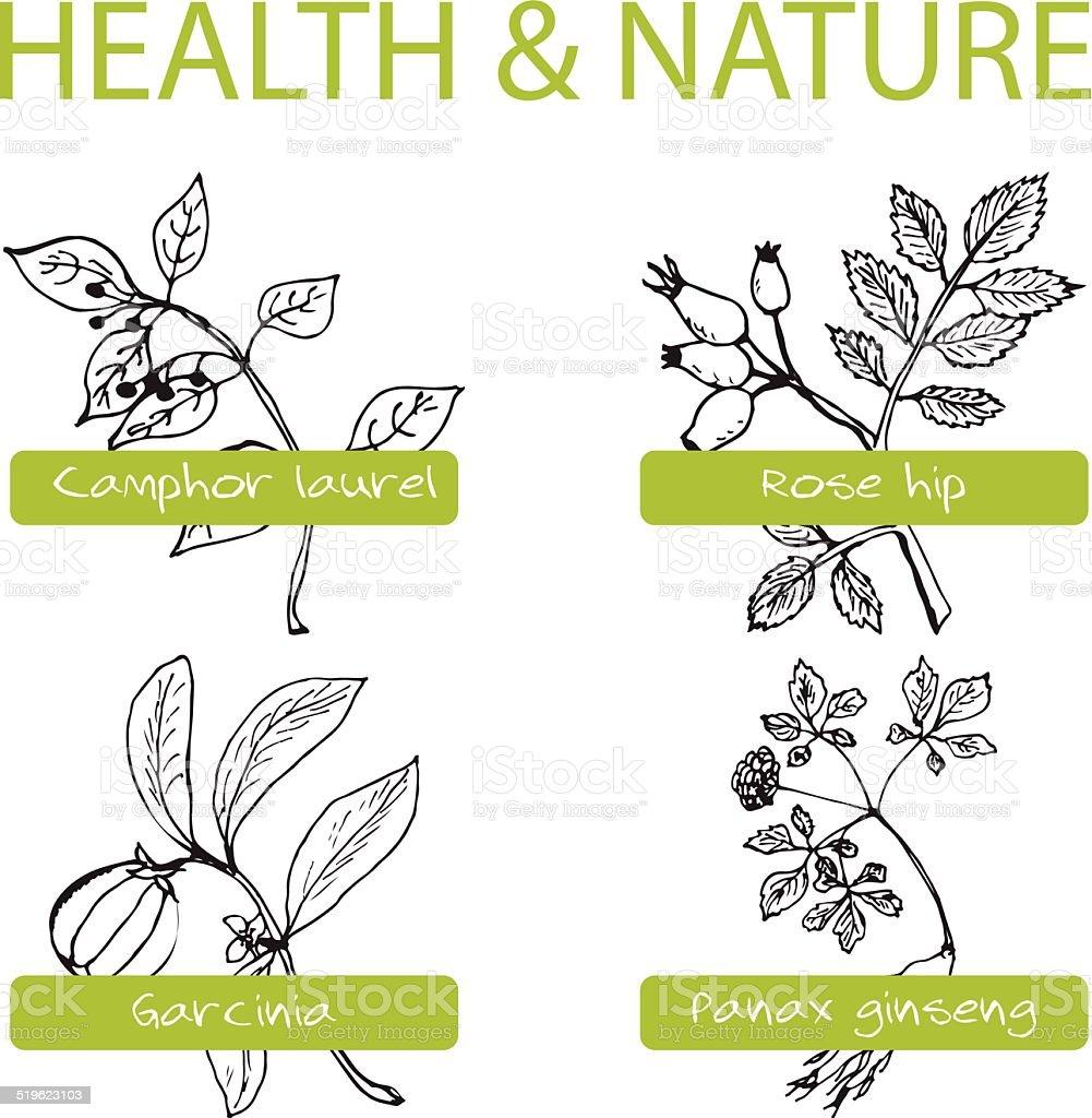 Handdrawn Set - Health and Nature vector art illustration